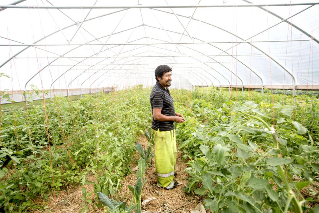 Preguntas y respuestas: la granja  de Juan González Torres combina  productos de México y de Wisconsin